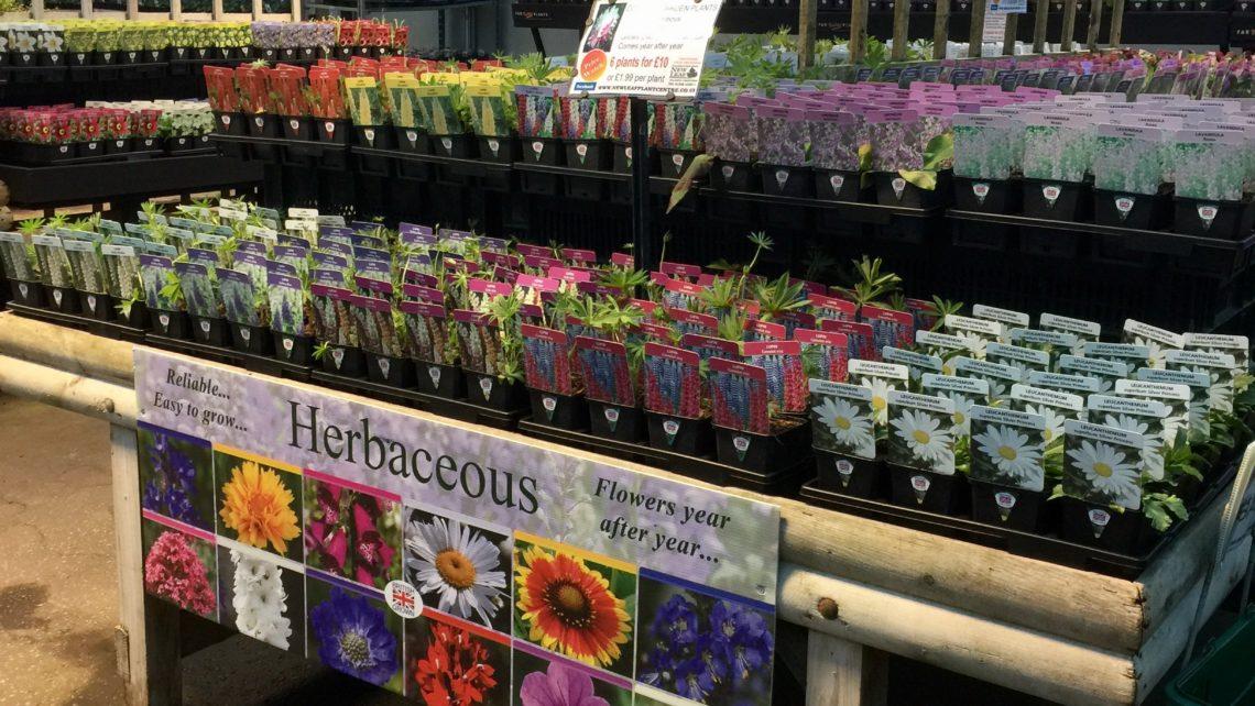 Herbaceous 9cm
